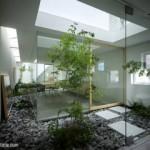 Menanam Tumbuhan Herbal di Dalam Ruangan (Bagian II)