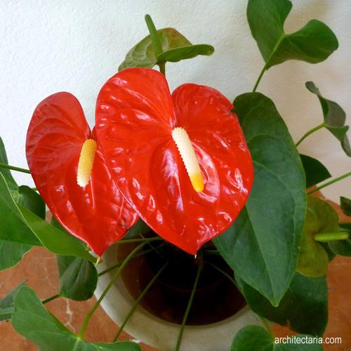 Memilih Jenis Tanaman Bunga Untuk Dekorasi Interior Ruangan Pt