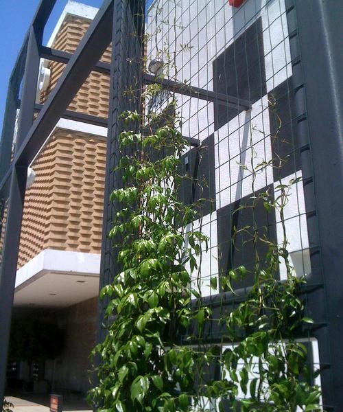 tanaman merambat pada bagian eksterior rumah