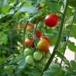 Anda Senang Berkebun? Yuk Intip Metode Berkebun yang Efektif