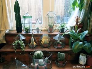 indoor cactus
