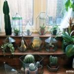 Tips Menanam dan Merawat Kaktus di dalam Ruangan