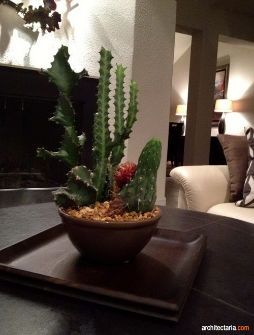 Tips Menanam Dan Merawat Kaktus Di Dalam Ruangan Pt