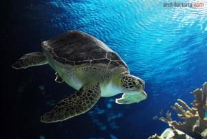aquarium kura-kura