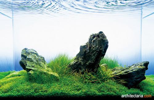 Memelihara Kura Kura Dalam Aquarium Pt Architectaria Media Cipta