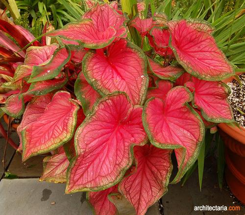 Jenis Jenis Tanaman Bunga Yang Cocok Ditanam Dalam Pot Pt Architectaria Media Cipta