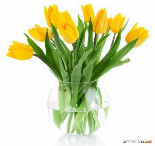 Jenis Jenis Tanaman Bunga Yang Cocok Ditanam Dalam Pot Pt