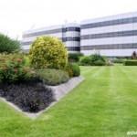 Mewujudkan Green Roofing untuk Rumah yang Asri