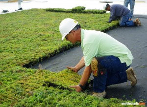 green roof_2