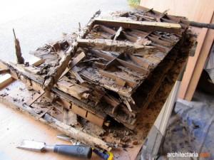 kerusakan furniture karena rayap