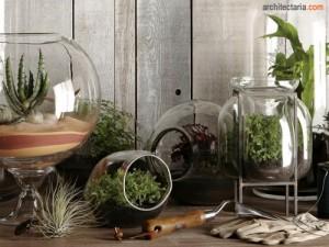 tanaman dalam kaca_terrarium_1