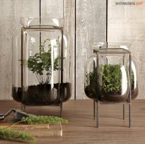 tanaman dalam kaca_terrarium_2