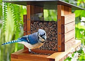 bird feeder_1