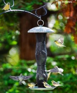 bird feeder_2