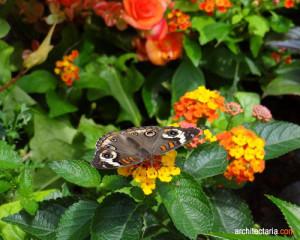 taman dan kupu-kupu_2