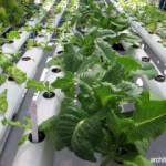 Berkebun Menjadi Lebih Seru dengan Greenhouse