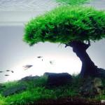 Ide dan Kreasi Aquascaping: Seni Aquarium yang Menawan