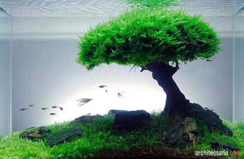 Ide Dan Kreasi Aquascaping Seni Aquarium Yang Menawan Pt
