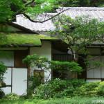 Atap Rumah Anda Berlumut? Ketahui Penyebab dan Cara Menghilangkan Lumut di Atap