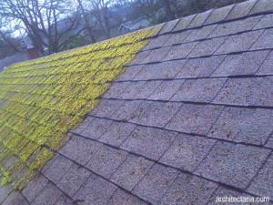 atap-rumah-berlumut-2