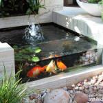 Membuat Kolam Ikan Sendiri di Taman Rumah