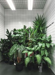 desain-interior-cafe-orang-utan-8