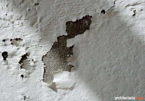 Cara Tepat Agar Dinding Rumah Tidak Lembab Pt